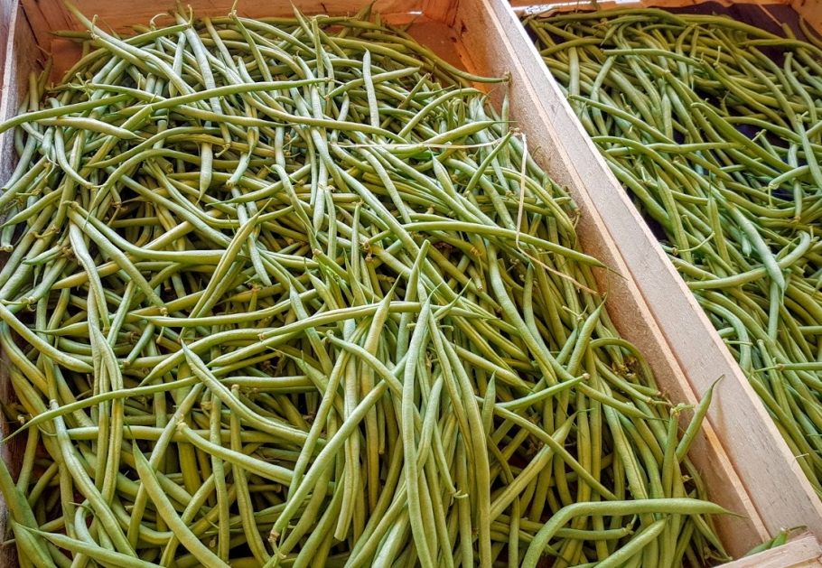 la culture du haricot en pot plantes et jardin de ville quand semer les haricots verts en. Black Bedroom Furniture Sets. Home Design Ideas
